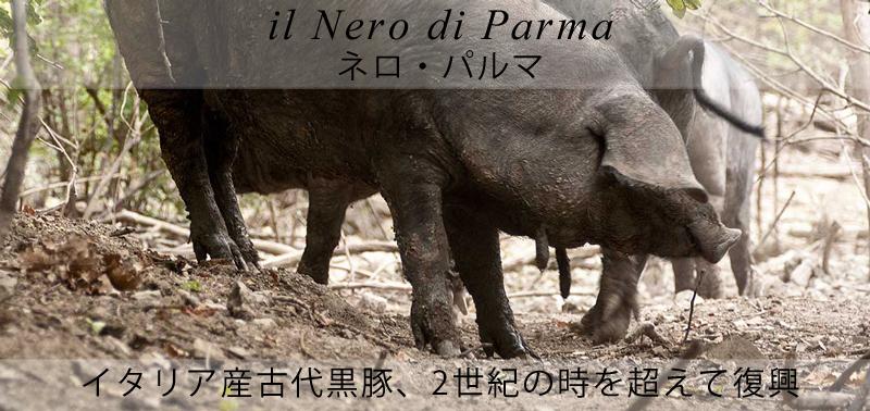 ピアッティ ネロ・パルマ